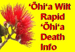 Ohia Wilt - Rapid Ohia Death Disease Information